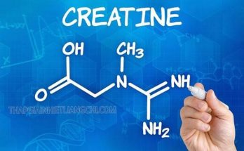 Creatine là gì?