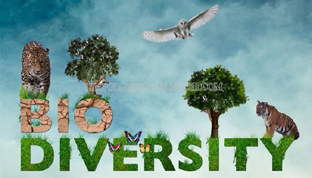 Tìm hiểu về đa dạng sinh học